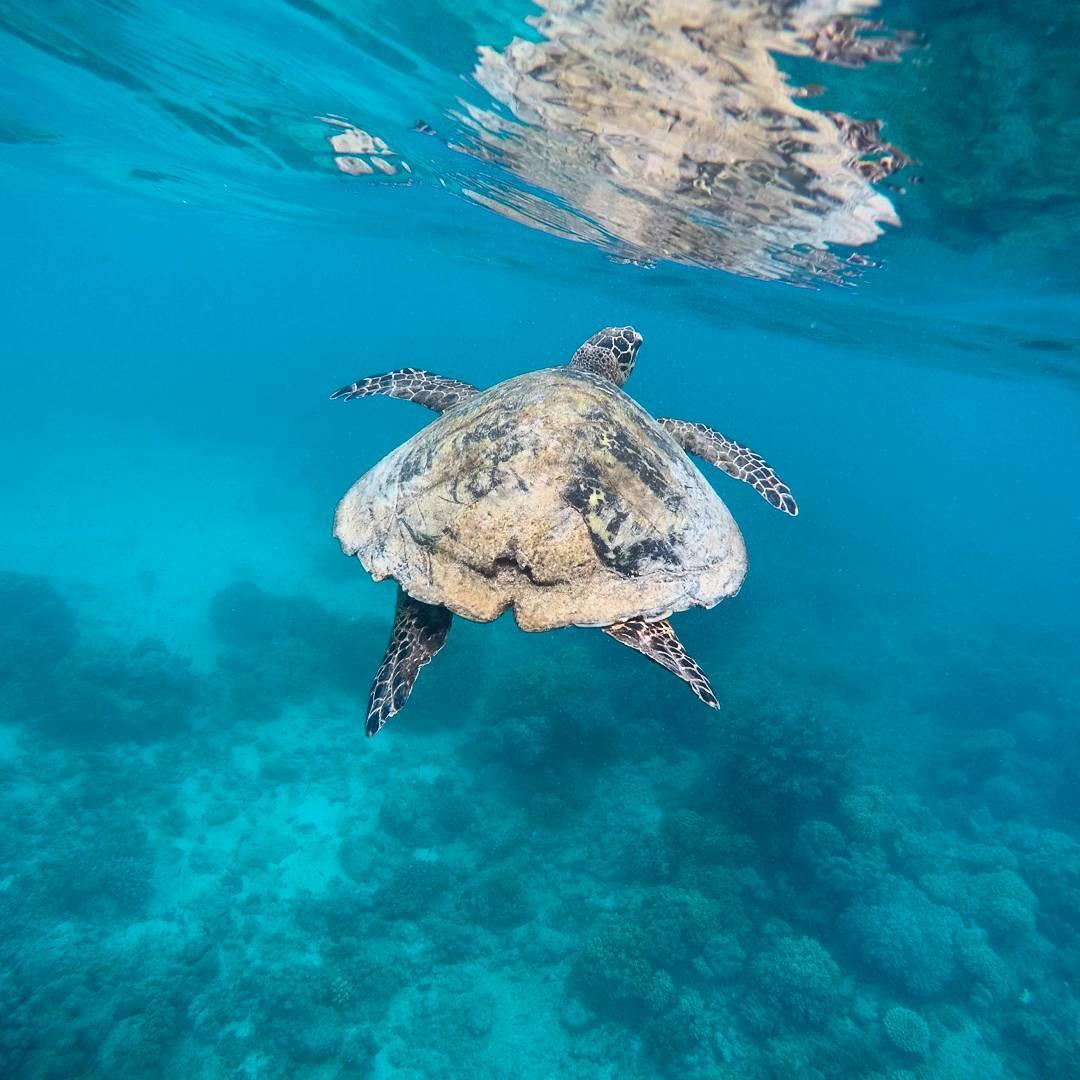 Turtle, Guide, Underwater, Snorkeling, Gopro