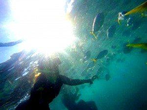 Whitsundays, Fish, Snorkeling