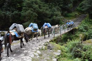Our Everest Base Camp Trek, CHAPTERTRAVEL, EBC Trek