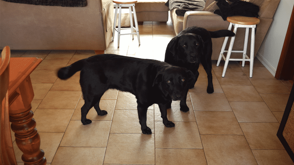 House Sitting in Australia, Perth, Happy Dogs, Pet Sitting, All Pets House Sitting