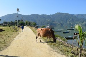 Things to do in Pokhara, Pokhara, Fewa Lake, Chapter Travel