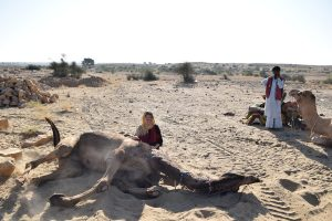 Sleeping in the desert, Things to do in Jaisalmer, Jaisalmer Fort, Rajasthan, India, Beautiful India, CHAPTERTRAVEL, What to do in Jaisalmer, Camel Safari, Is it ethical to ride a camel