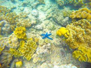 Coral, Starfish, Snorkeling, Gopro