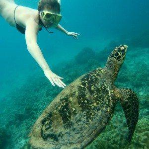 Hawksbill turtle, underwater, gopro, snorkeling