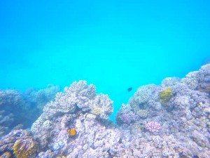 Great Barrier Reef, GoPro Hero 4, Turtle, Underwaterlife, Selfieturtle, Scubadiving, Snorkeling, Adventure, Backpacking, Campervan, Cairns, Whitsundays