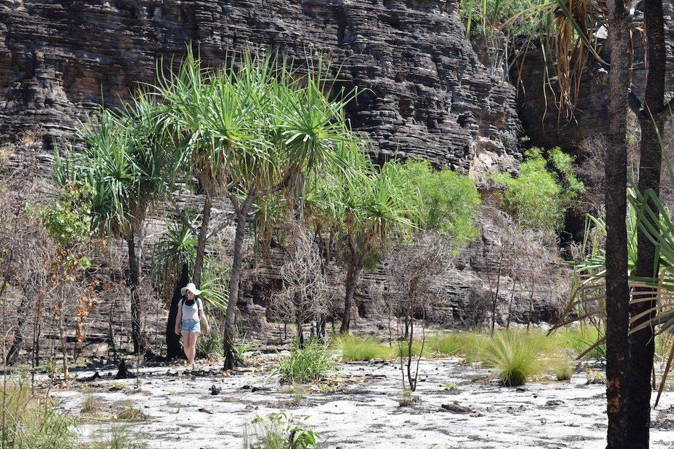 Kakadu National Park, Ubirr, Palmtrees, Northern Territory, CHAPTERTRAVEL