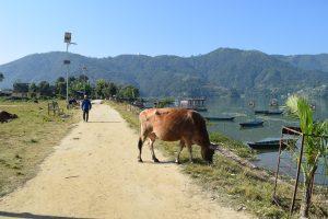 Things to do in Pokhara, Pokhara, Fewa Lake, Chapter Travel
