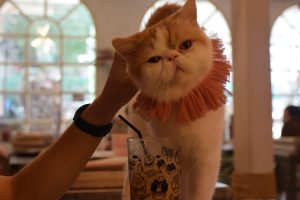 Caturday Cat Café, Things to do in Bangkok